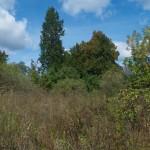 Tyszkowice. Okazała daglezja i świerk zwyczajny w zdziczałej części parku.