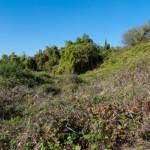 Czyszki. Porośnięte zdziczałą roślinnością miejsce po dawnym założeniu dworsko-ogrodowym. Po II wojnie światowej w tym miejscu znajdował się kołchoz, po którym nie pozostał już żaden ślad.