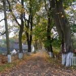 Krukienice. Aleja przy głównej drodze do pałacu z drugiej połowy XX wieku.