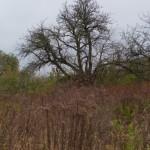 Lacka Wola. Pozostałości dworskich ogrodów.