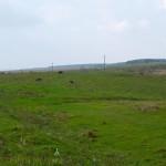Wiszenka. Miejsce po dawnym założeniu dworskim, obecnie użytkowane jako pastwisko.