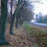 Chłopy (ukr. Переможне). Granica parku w postaci rozluźnionego szpaleru grabowego oraz dobrze zachowanej ahy.