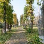 Pohorce (ukr. Погірці ). Zachowane aleje lipowe wiodące do niezachowanego pałacu. obecnie całkowicie ogłowione.
