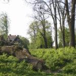 Nadyby (ukr. Надиби). Powalone drzewa w centralnej części parku, w tle widoczny pałac Tchórznickich.