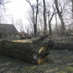 Wykoty (ukr. Викоти). Wycięte drzewa na terenie resztek zdziczałego parku.