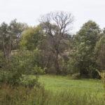 Siedliska (ukr. Оселя). Miejsce po dawnym dworze z częściowo zachowanym drzewostanem.