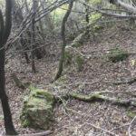 Szczerzec (miejscowość nieistniejąca). Fragmenty murów zniszczonego dworu znajdującego się na zalesionym terenie poligonu jaworowskiego.