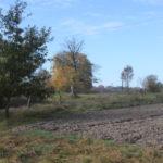 Ulicko Seredkiewicz (ukr.Середкевичі). Pojedyncze lipy rosnące na dawnym obszarze podworskim.