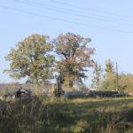 Wróblaczyn (ukr.Вороблячин). Dwa okazałe dęby na obszarze dawnego folwarku.