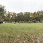 Krechów (ukr. Крехів). Rzędowe nasadzenia w centrum ogrodów klasztoru Bazylianów.