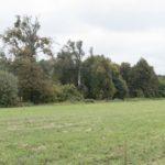 Krechów (ukr. Крехів). Pozostałości rzędowych nasadzeń przy głównej drodze dojazdowej do klasztoru.