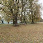 Kupiczwola (ukr. Купичволя ). Skupisko rzędowych nasadzeń lipy oraz pnie po wyciętych drzewach, na terenie dawnego ogrodu.