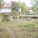 Leszczatów (ukr. Лещатів). Pnie po wyciętych drzewach na dawnym obszarze podworskim.