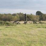 Rekliniec (ukr. Реклинець). Martwe drzewo na terenie dawnych ogrodów dworskich.