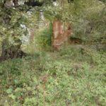 Skwarzawa Nowa (ukr. Нова Скварява). Ruiny budynków inwentarskich.