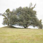 Szmitków (ukr. Гута). Skupisko drzew przy kopcu widokowym (?) w centralnej części założenia.