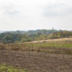 Tartaków (ukr. Тартаків). Założenie dworsko-ogrodowe w Tartakowie. Widok z oddali, z drogi wiodącej od Spasowa.